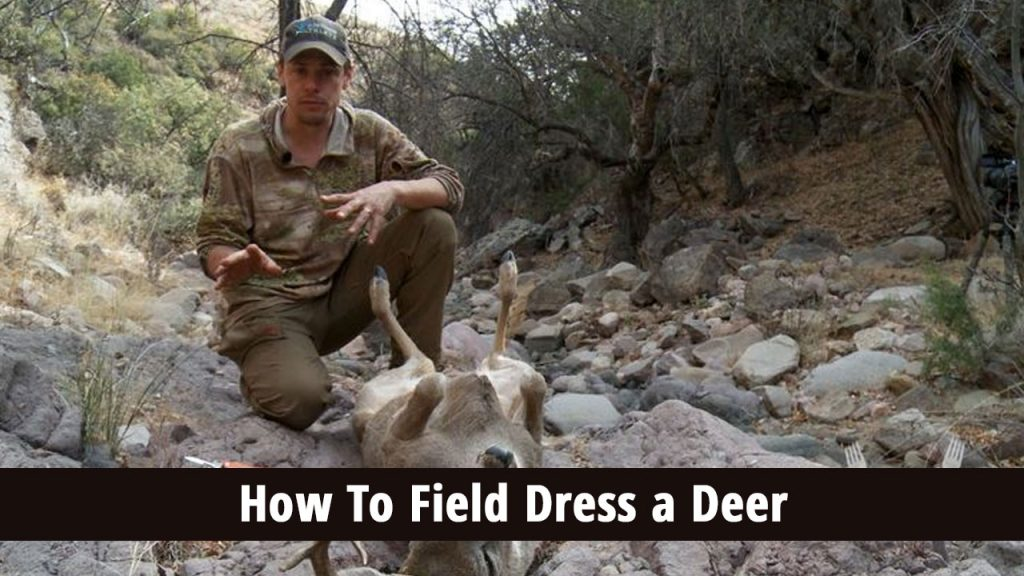How to Field Dress a Deer