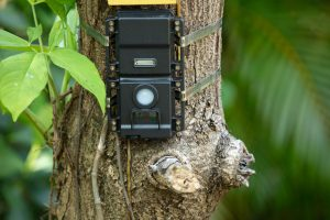 How to Buy a Trail Camera: A Buyer's Guide for Beginners