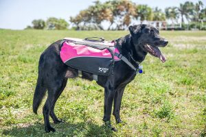 9 Best Dog Backpacks Reviews-Buyer Guide 2019