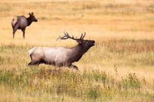 Your First Hunt: A Guide to Deer Hunting for Beginners