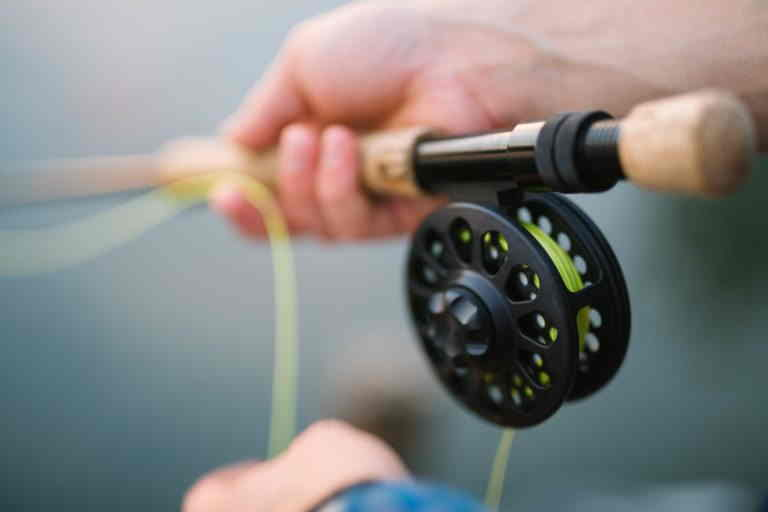 How to Start Fly Fishing: What Do You Need As a Beginner Fly Fisher
