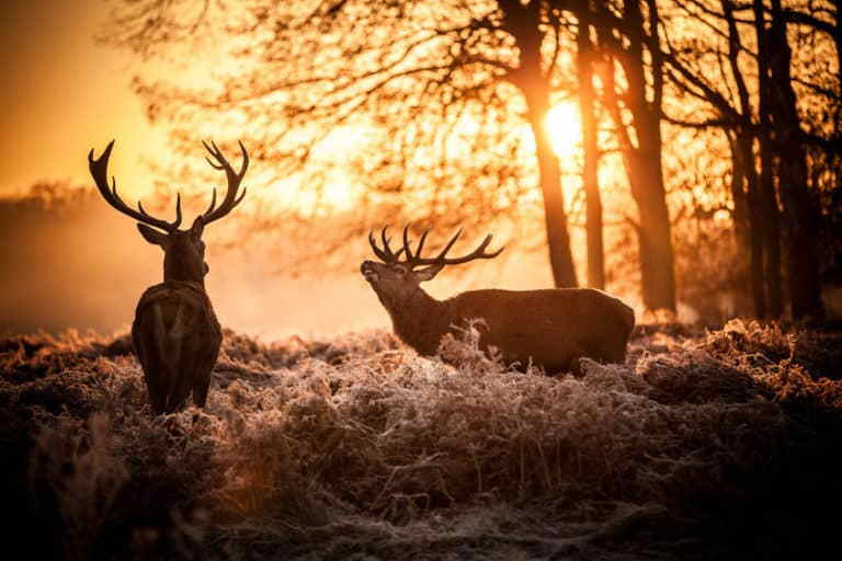 Top 10 Deer Hunting States