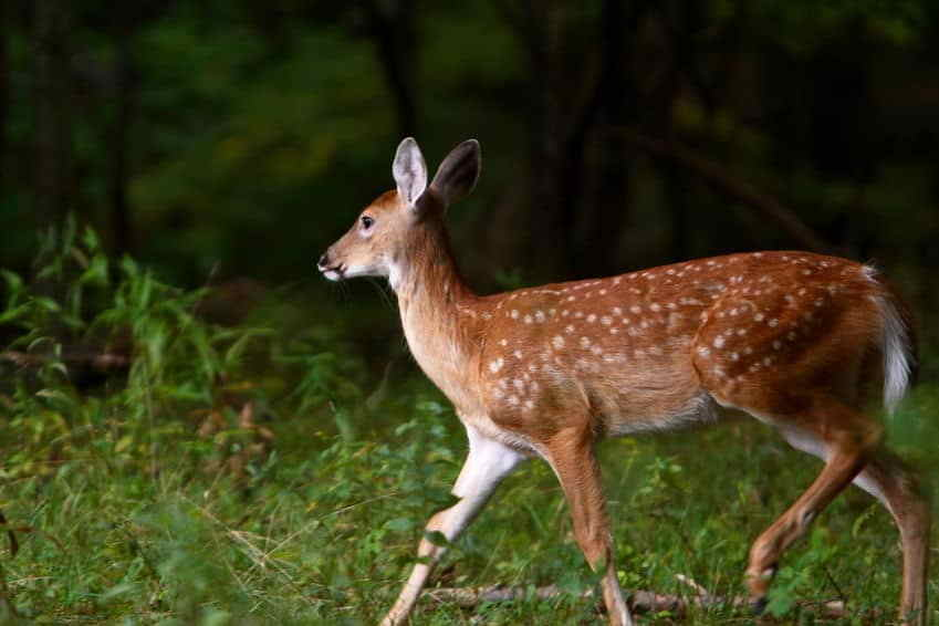 Choose the Right Times for Deer Hunting