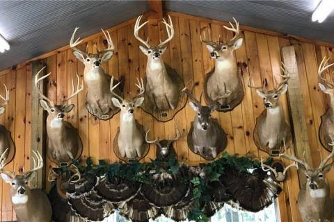 Taxidermy Mount